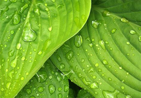 Pollet – ekologické řady